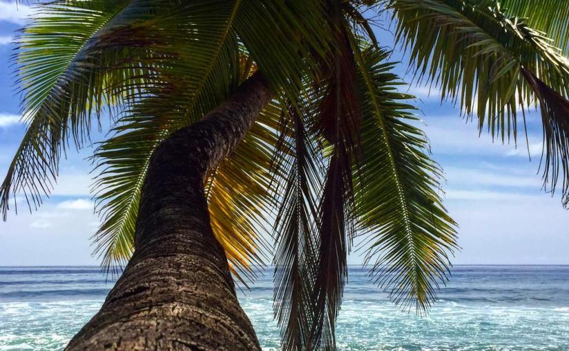 Palm Trees and OceanBreeze