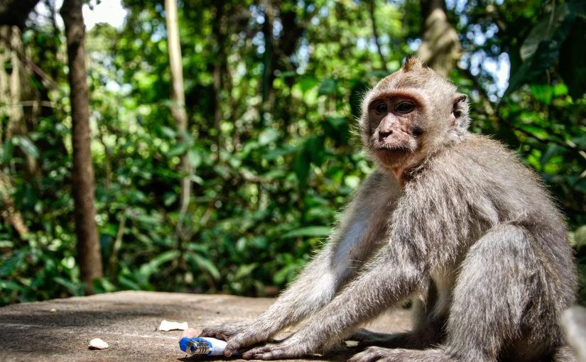 Monkey Business inBali