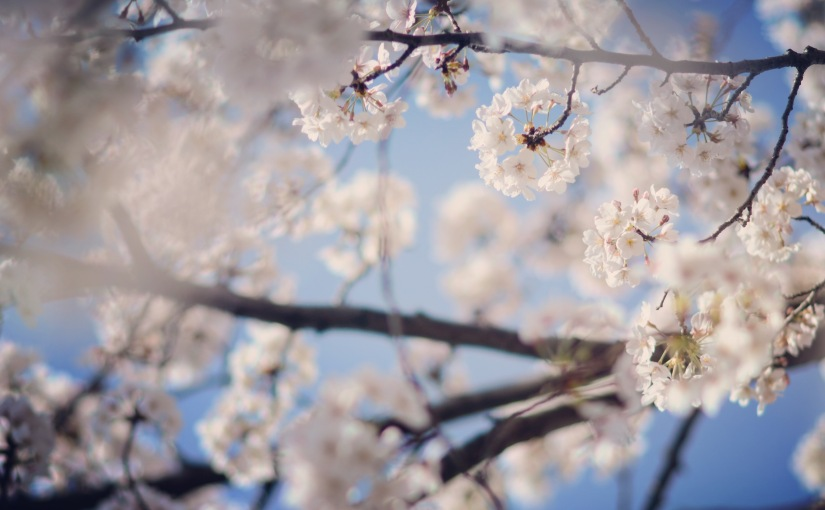 Blossoms & Bubbly inTokyo