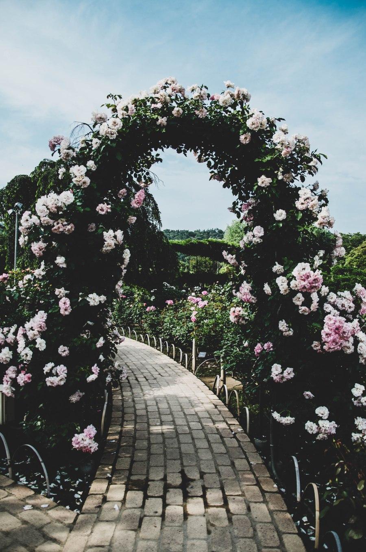 Roses-7.jpg